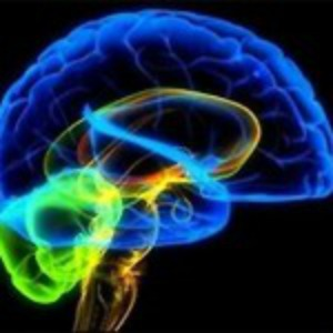 A higher activity on the left than on the right frontal part of the brain means we feel better.