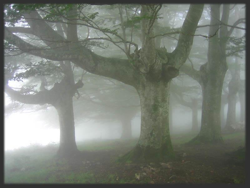La niebla en un bosque sombrío
