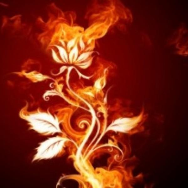 rosa de fuego, bosque sin  luz, pasion, magia