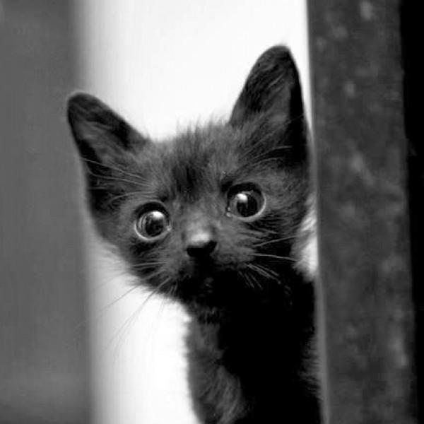 Los gatos pueden leer la mirada de las personas y entender su corazón