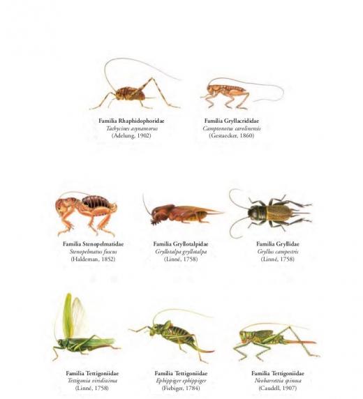Diferentes insectos que pueden formar parte de un enjambre