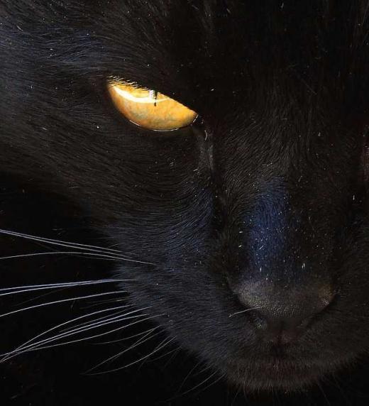 Látigo vigila desde el tejado de la cabaña de Lulú.