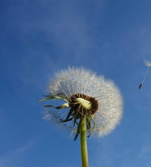 como sopla el viento