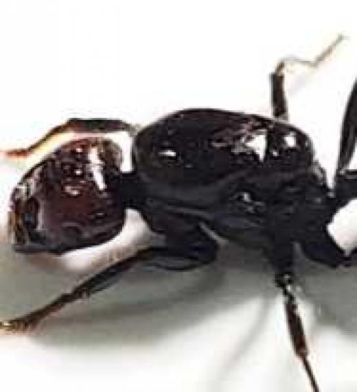 La mutilación de un compañero le recuerda a un macabro juego de cuando eran niños donde martirizaban hormigas. También son una metáfora del hombre ante su destino.
