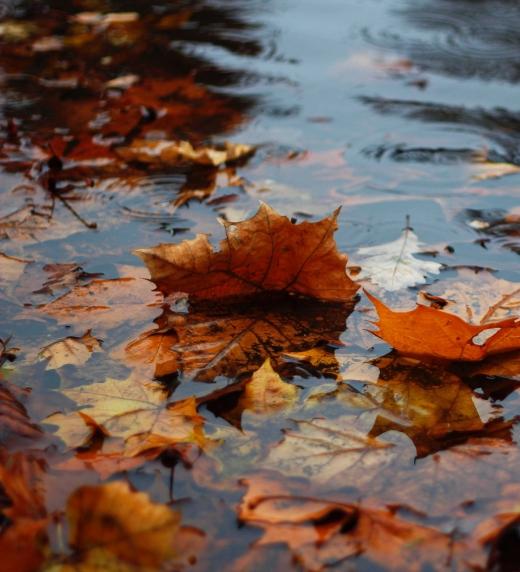 Hojas de otoño marchitas en colores naranjas, rojos y amarillos mostaza flotando en el agua.