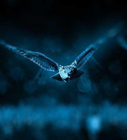 El pájaro de los 10.000 años