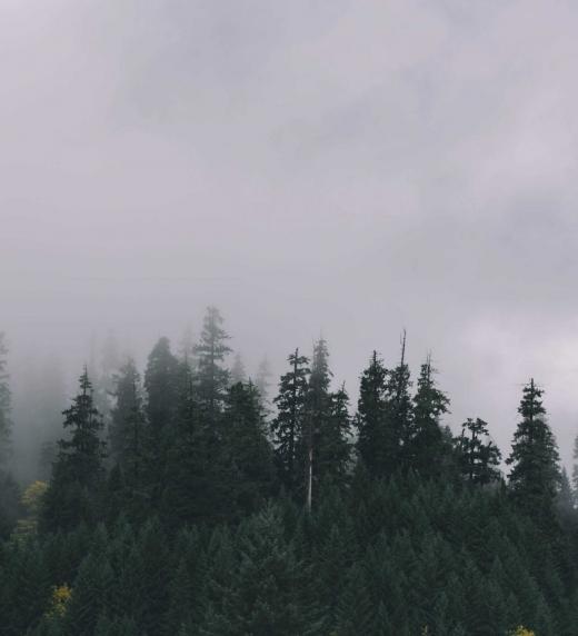 La niebla cae sobre las Cinco Montañas... la sociedad está al borde del colapso...