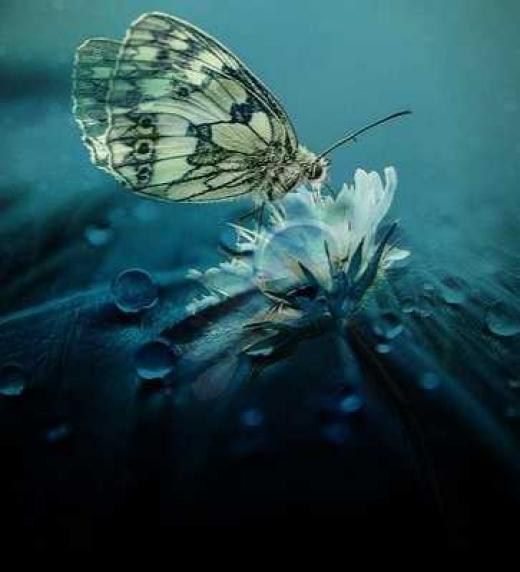 Editorial Adarve - Como mariposa tocando el alma