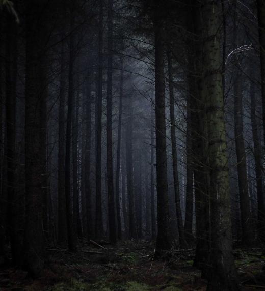 Fotografía de un bosque oscuro