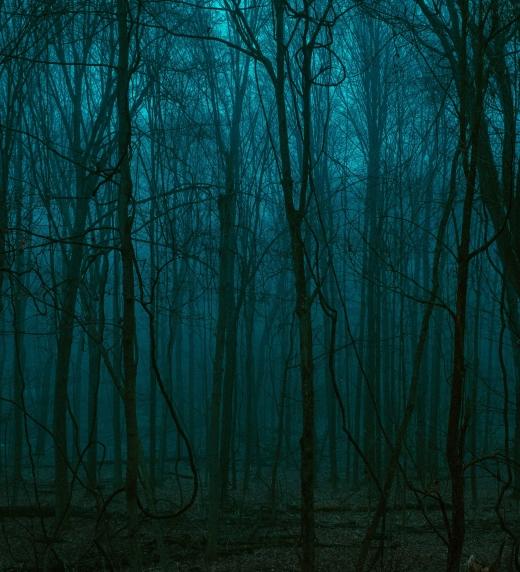 Fotografía de un bosque oscuro por Keagan Henman
